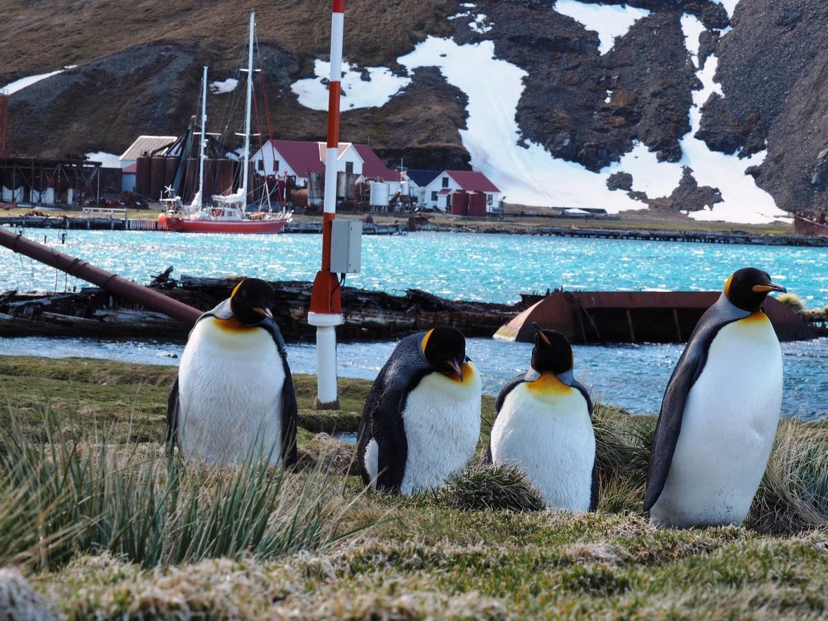 """Trawers Shackletona - 100 lat później"""